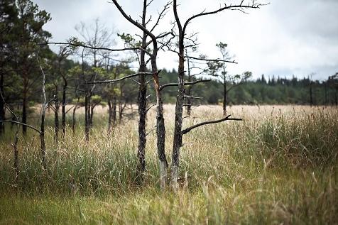 ojnareskogen-natur-att-bevara-widget